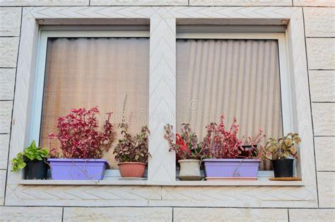 fiori da davanzale una finestra con le tende ed i vasi da fiori sul davanzale