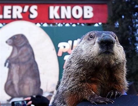 groundhog day news groundhog day 2014 picture groundhog day 2014 abc news