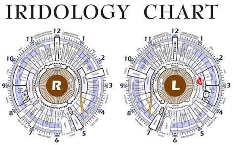 Iridology Detox by 62 Best Images About And Iridology On Eye