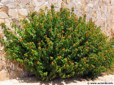 Fleurs Qui Resistent Au Vent des plantes qui r 233 sistent 224 la s 233 cheresse