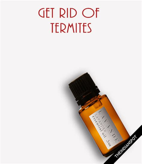 home remedies to get rid of termites theindianspot