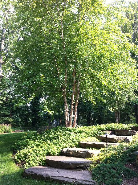 Landscape Design Baltimore Landscaping Baltimore Landscape Services In Baltimore