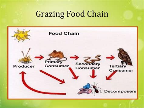 backyard food chain ecology ecosystems