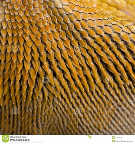 close   scales  lawsons dragon stock photo image