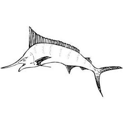 sailfish coloring pages how to draw sailfish