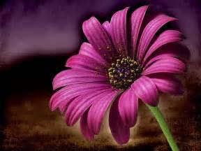 photo gratuite marguerite fleur macro image