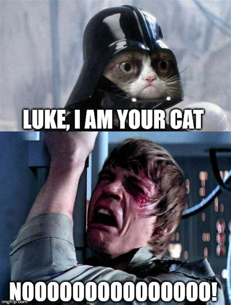Star Wars Cat Memes
