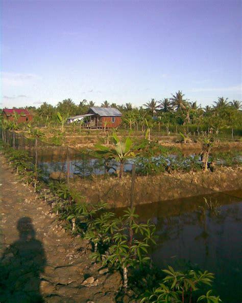 gallery kelinjau foto tambak ikan budidaya ikan nila