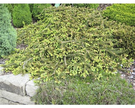 terrasse vergrößern pflanzen set balkon terrasse 1 3 stk co bei hornbach kaufen