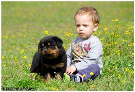 rottweiler with children το προφίλ των rottweiler dogpark gr