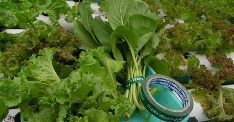 Pupuk Ab Mix Alami cara memasarkan produk hidroponik hidrafarm