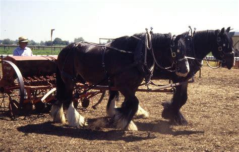 Gr Te Pferd Der Welt by Preview