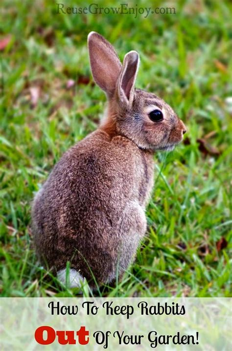 how to keep rabbits out of your backyard how to keep rabbits out of your garden safe and easy