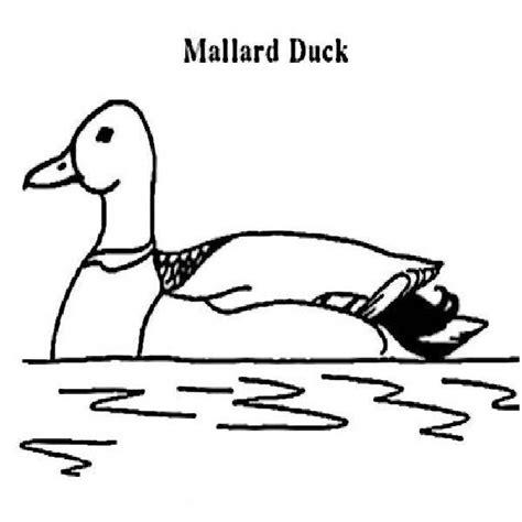 free coloring pages mallard duck 17 best images about kindergarten mallard ducks on