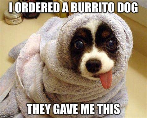 Burrito Meme - burrito dog imgflip