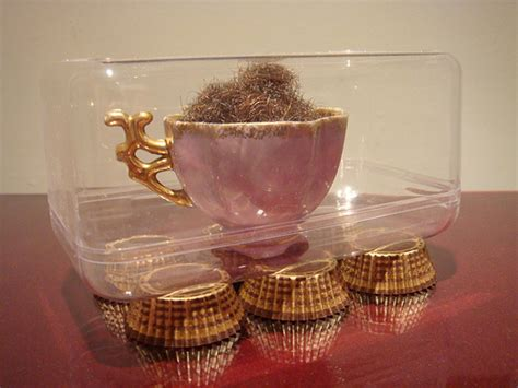 pubic art pubic art with this teacup full of pubes you are