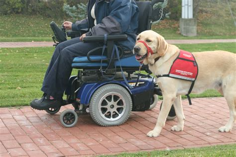 dogs walkthrough are guide dogs a fit for seniors 50 plus world