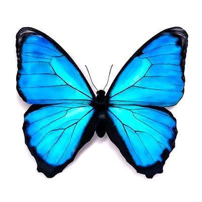 blue butterfly tattoo designs beautifull blue butterfly design