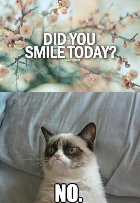 Cute No Meme - funny cats best funniest cat quotes quotes and humor