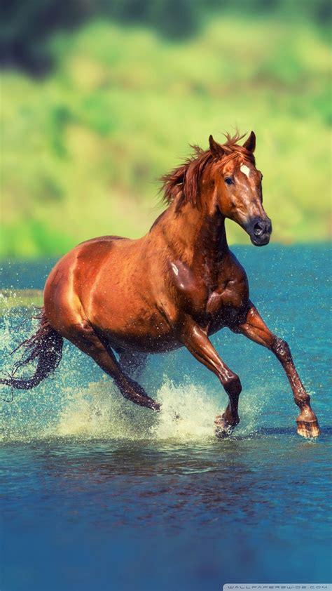 wallpaper iphone 6 horse free horse phone wallpaper by maalymaal