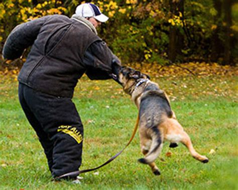 free puppy classes protection obedience therapy cleveland ohio