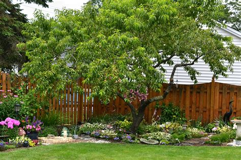 slow growing shrubs create low maintenance garden