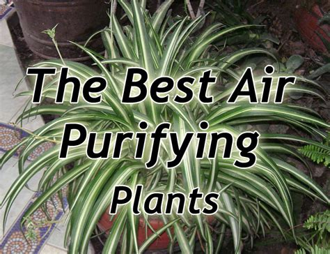 plants  purify indoor air soilless