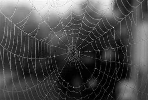 by web spider web oneheartonemind s