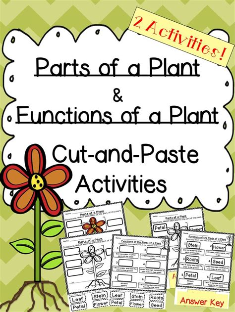 Parts Of Plants And Their Functions Worksheet