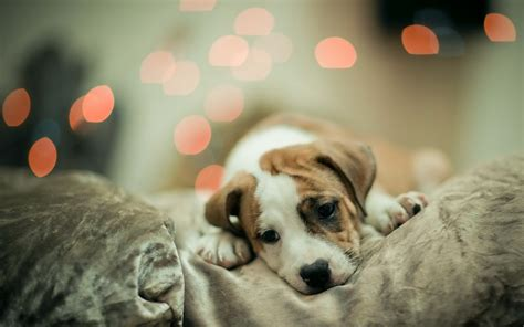 cute dog wallpapers for windows cute puppy wallpaper windows mode