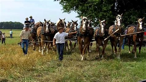 amish plowing with a seven hitch amish 12 hitch pulling a 4 bottom plow loved the