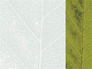 green plans green leaf presentation design ppt backgrounds nature
