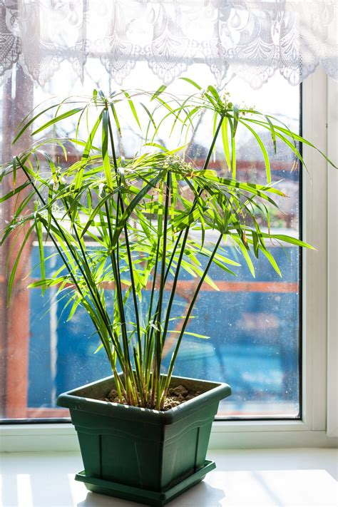 indoor plants that don t need light house plants that don t need light 28 images plants