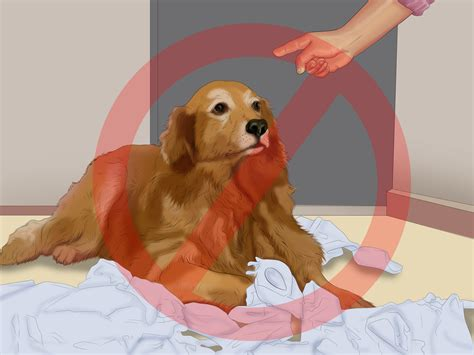 when to potty a puppy how to potty a puppy in an apartment 10 steps