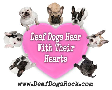 deaf puppy dogs for deaf images gallery