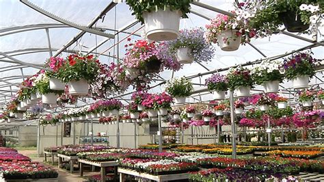 Greenhouse Garden Center by Saunders Greenhouse Beautiful Flowers Garden Plants