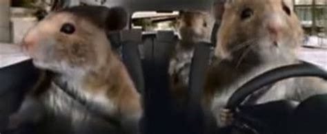 Kia Soul Hamster Song Kia Soul Commercial Songs Hamsters Find Mp3 Do What You