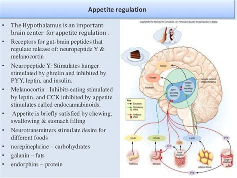 neuropeptide y carbohydrates nutrition
