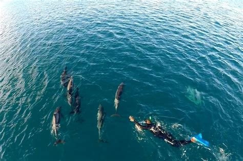 catamaran mauritius dolphins swim with dolphins mauritius jph charters