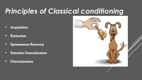 basic principles of classical classical conditioning by ivan pavlov