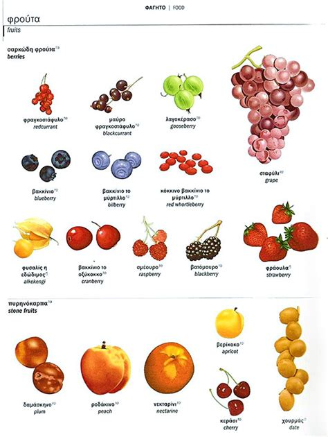 fruit dictionary mongolian dictonary англи монгол толь