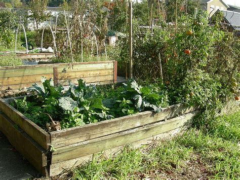 benefits of raised garden beds the benefits of raised bed gardening the social silo