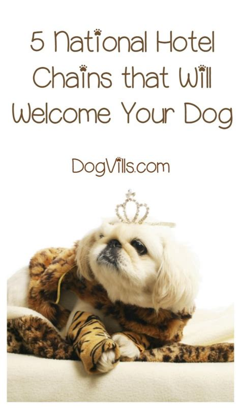 hotel chains that allow dogs what are the best pet friendly hotel chains