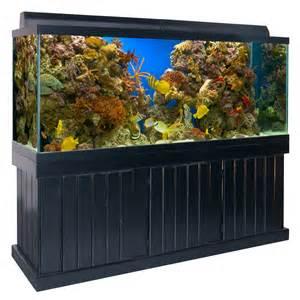 About Our Aquariums