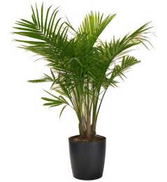 House Plat Most Popular Houseplants Costa Farms