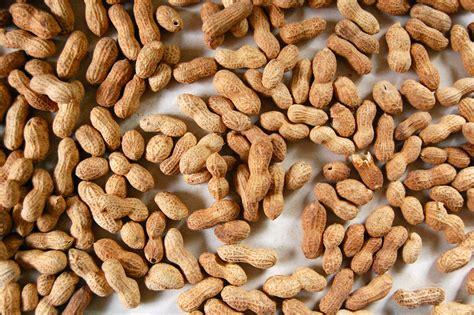 deep in the southern llano peanuts local llano