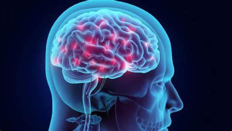 imagenes de el cerebro humano 191 es demasiado grande el cerebro humano