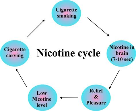 Define Detox Nicotine by How Does Nicotine Stay In Your System Details