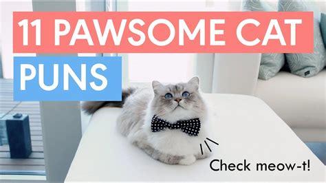 pawsome cat puns    day youtube