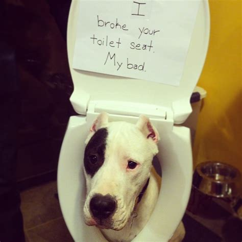 i let my dog eat me out confessions the 19 most popular dog shaming shenanigans in the past